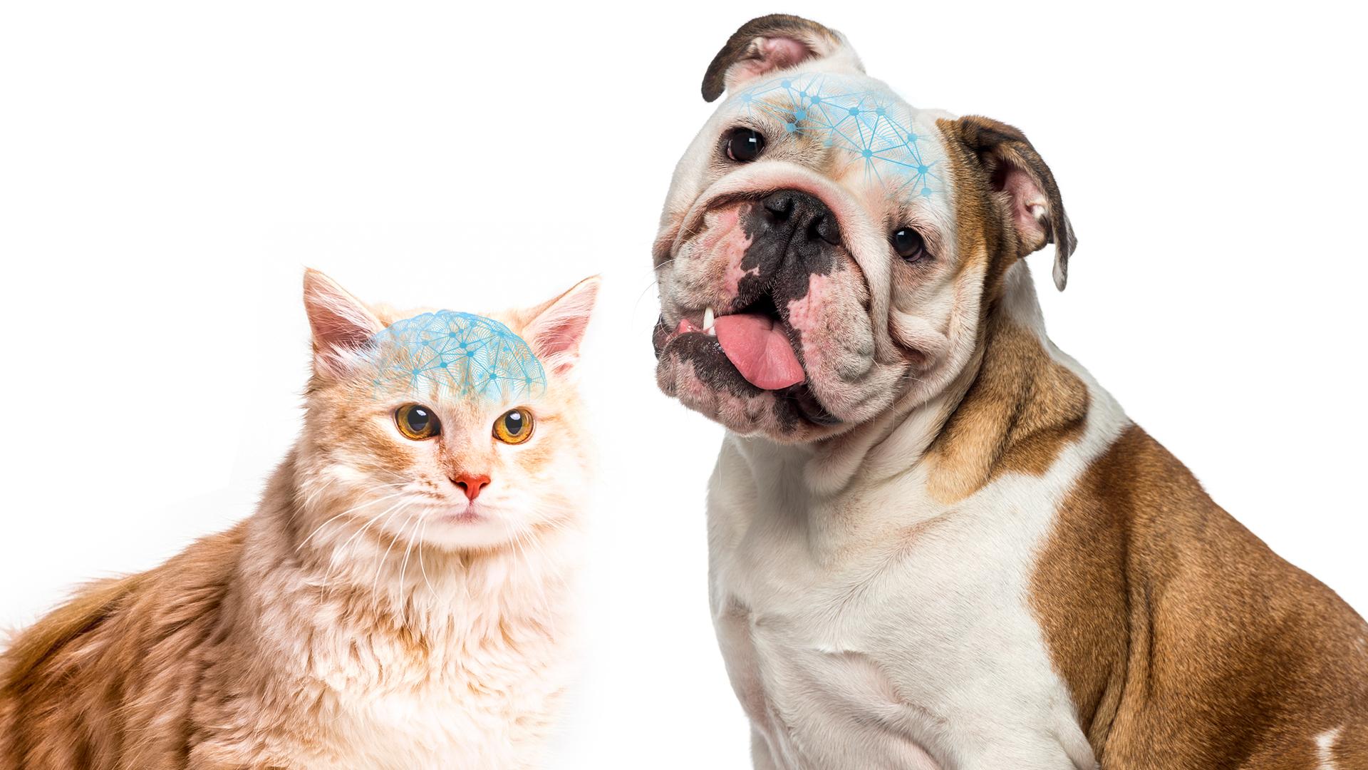 Capacitação em Neurologia de Cães e Gatos