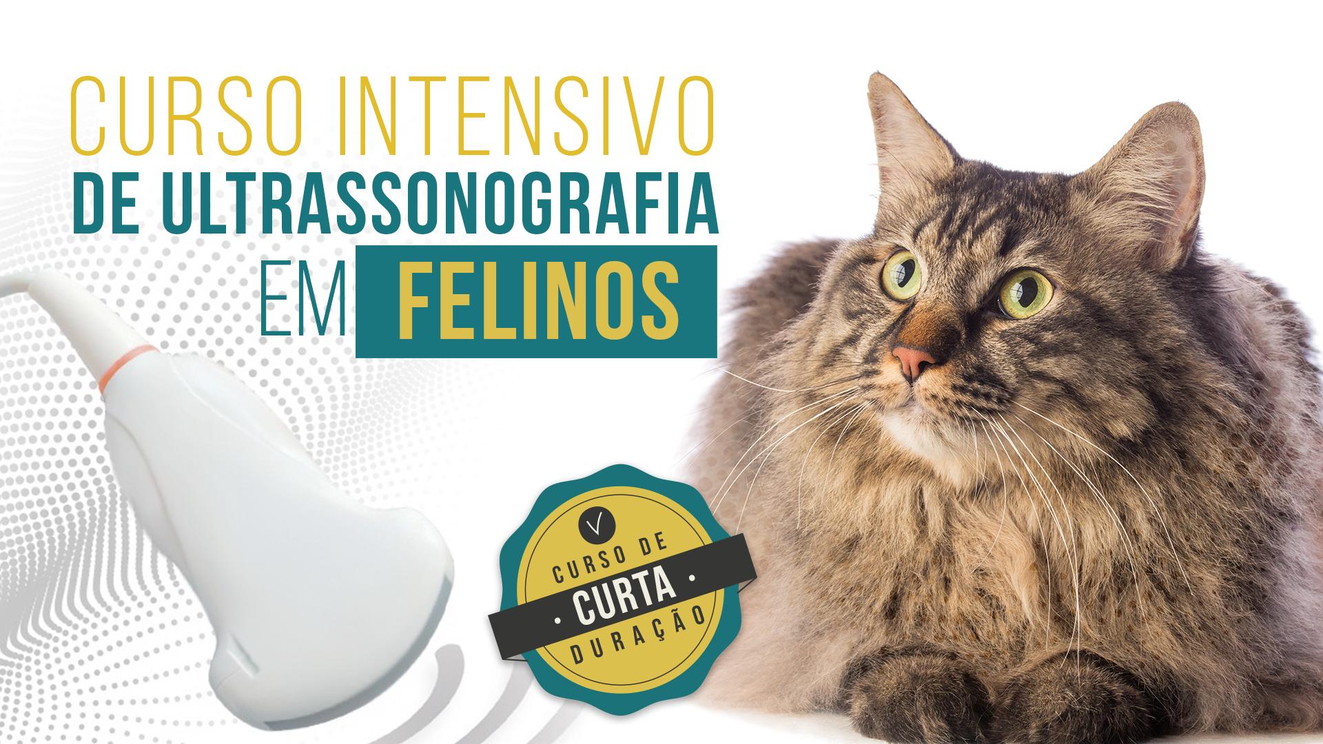 Curso Intensivo de Ultrassonografia em Felinos