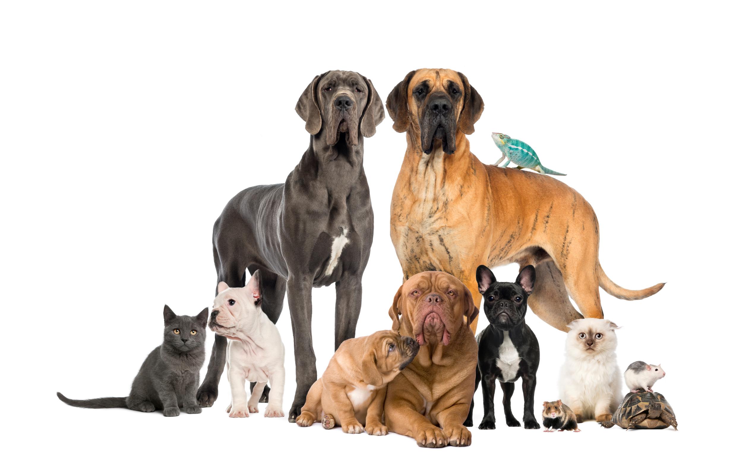 Clínica de Pequenos Animais