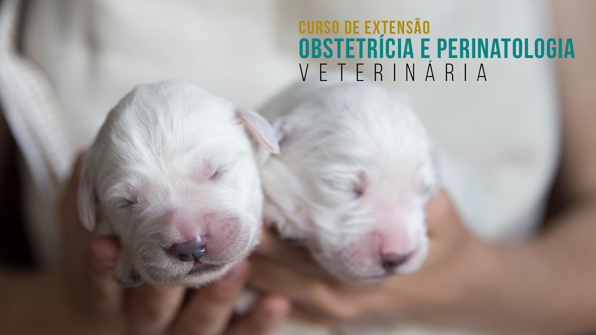 Curso de Extensão em Obstetrícia e Perinatologia Veterinária