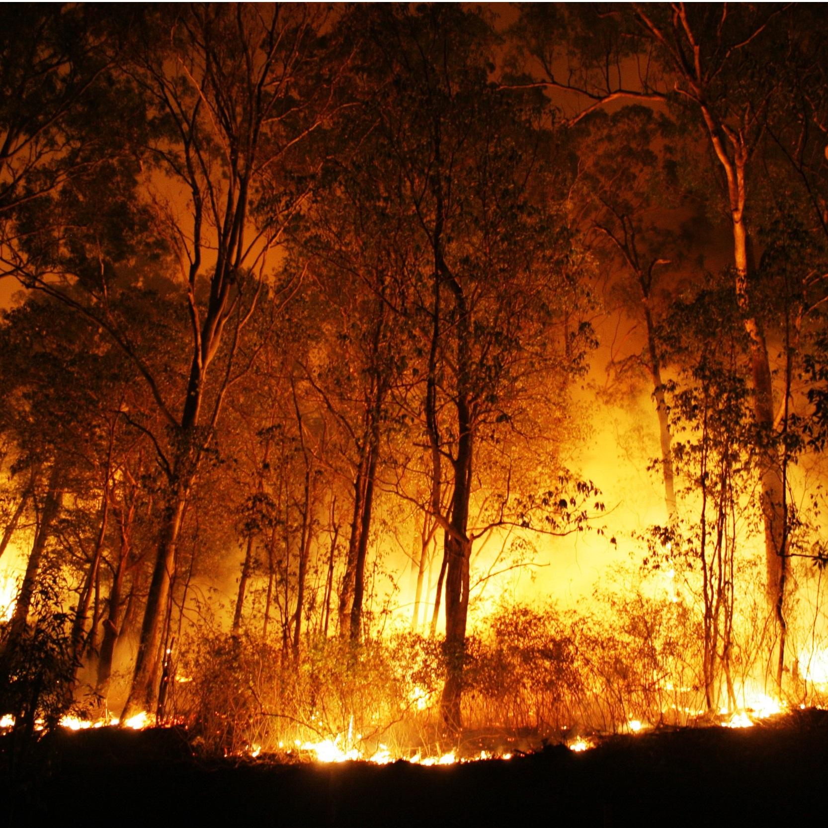aula-incendios-florestais-concurso