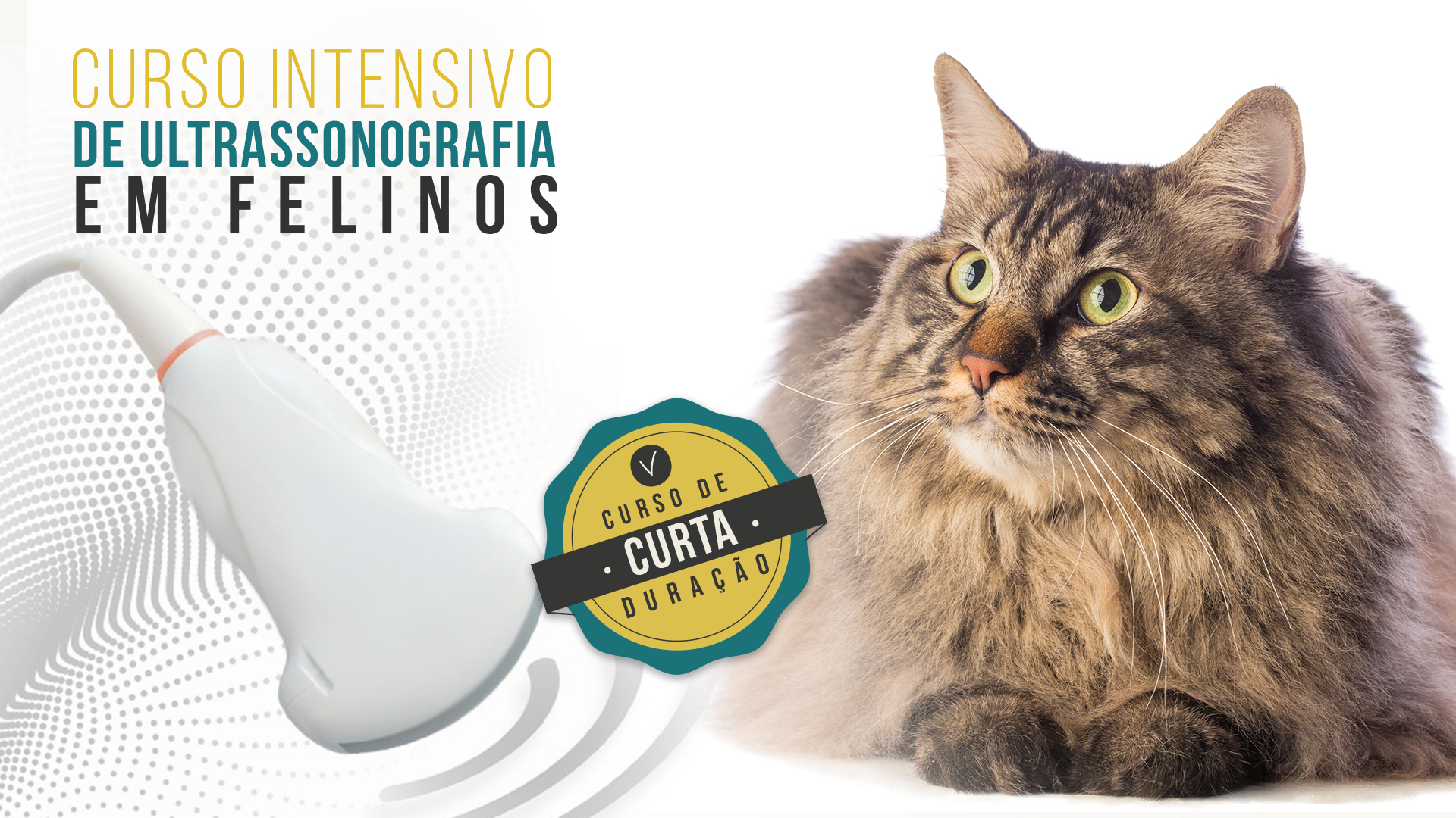 Curso Intensivo de Ultrassonografia Abdominal em Felinos