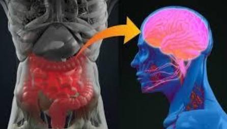 Relação Intestino Cérebro