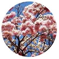 aula-taxonomia-vegetal-florestal-concurso