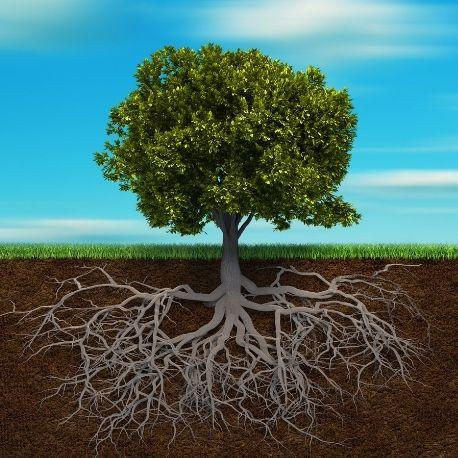 Terapia Integral Sistêmica atua na raíz dos seus problemas